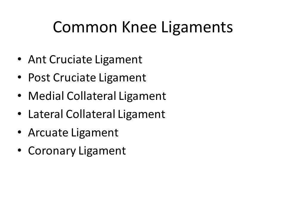 Knee Bursae Semimembraneusus Bursa
