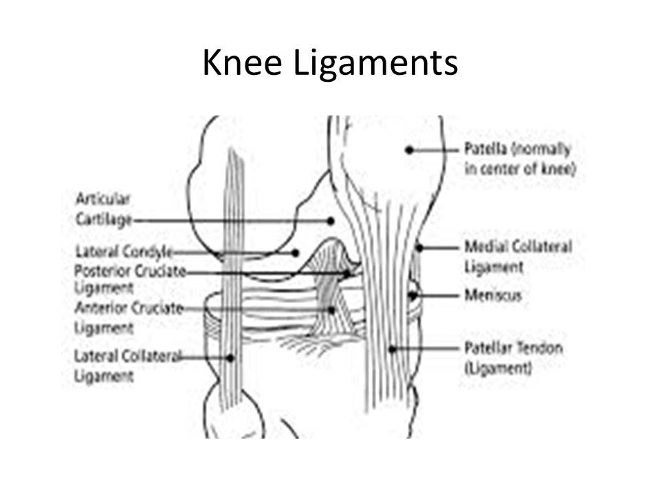 Knee Bursae