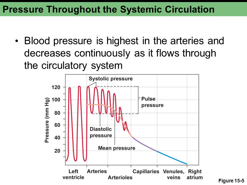 Pressure Throughout the Systemic Circulation Blood pressure is highest in the arteries and decreases continuously as it flows through the circulatory system Figure 15-5