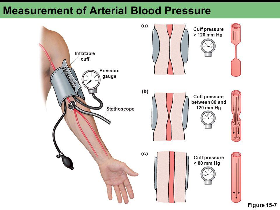 Cuff pressure > 120 mm Hg Stethoscope Cuff pressure between 80 and 120 mm Hg Cuff pressure < 80 mm Hg Inflatable cuff Pressure gauge (a) (b) (c) Measurement of Arterial Blood Pressure Figure 15-7