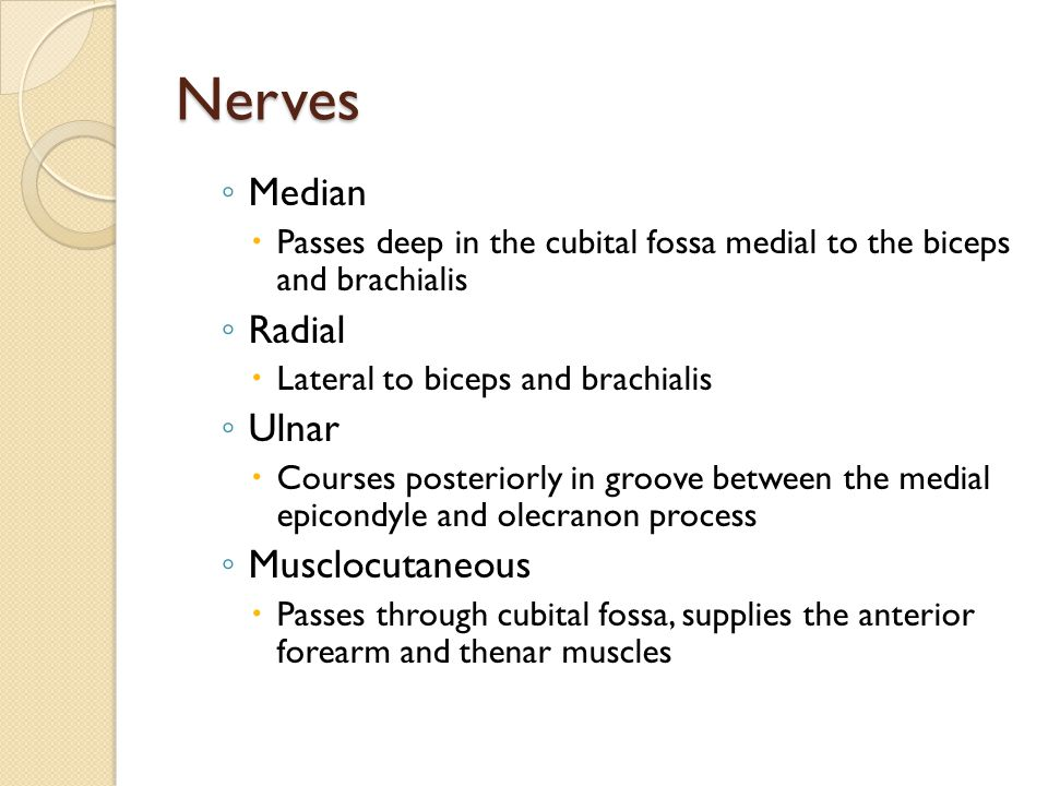 Nerves ◦ Median  Passes deep in the cubital fossa medial to the biceps and brachialis ◦ Radial  Lateral to biceps and brachialis ◦ Ulnar  Courses p