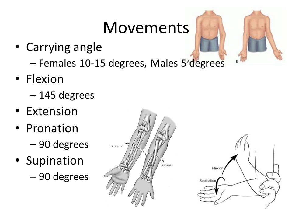 Movements Carrying angle – Females 10-15 degrees, Males 5 degrees Flexion – 145 degrees Extension Pronation – 90 degrees Supination – 90 degrees