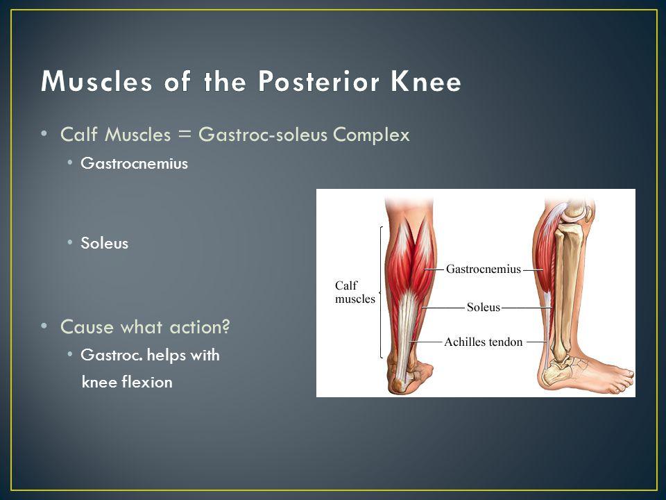 Calf Muscles = Gastroc-soleus Complex Gastrocnemius Soleus Cause what action.