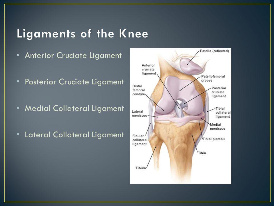 Anterior Cruciate Ligament Posterior Cruciate Ligament Medial Collateral Ligament Lateral Collateral Ligament