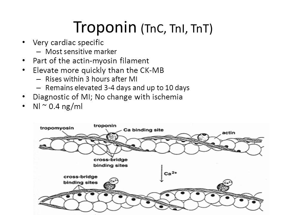 Troponin (TnC, TnI, TnT) 141