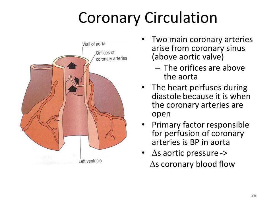 Coronary Circulation 35