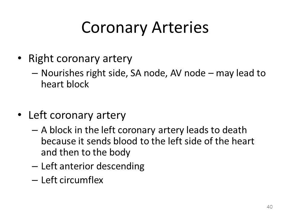 Coronary Arteries 39