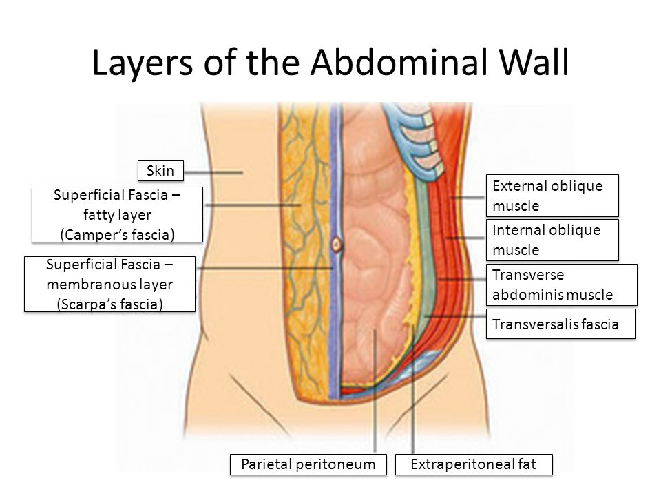 Layers of the Abdominal Wall Skin Superficial Fascia – fatty layer (Camper's fascia) Superficial Fascia – fatty layer (Camper's fascia) Superficial Fa