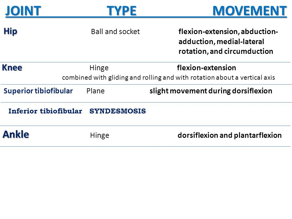 JOINT TYPE MOVEMENT Hip Hip Ball and socket flexion-extension, abduction- adduction, medial-lateral rotation, and circumduction Knee Knee Hingeflexion-extension combined with gliding and rolling and with rotation about a vertical axis Superior tibiofibular Planeslight movement during dorsiflexion Inferior tibiofibular SYNDESMOSIS Ankle Ankle Hingedorsiflexion and plantarflexion