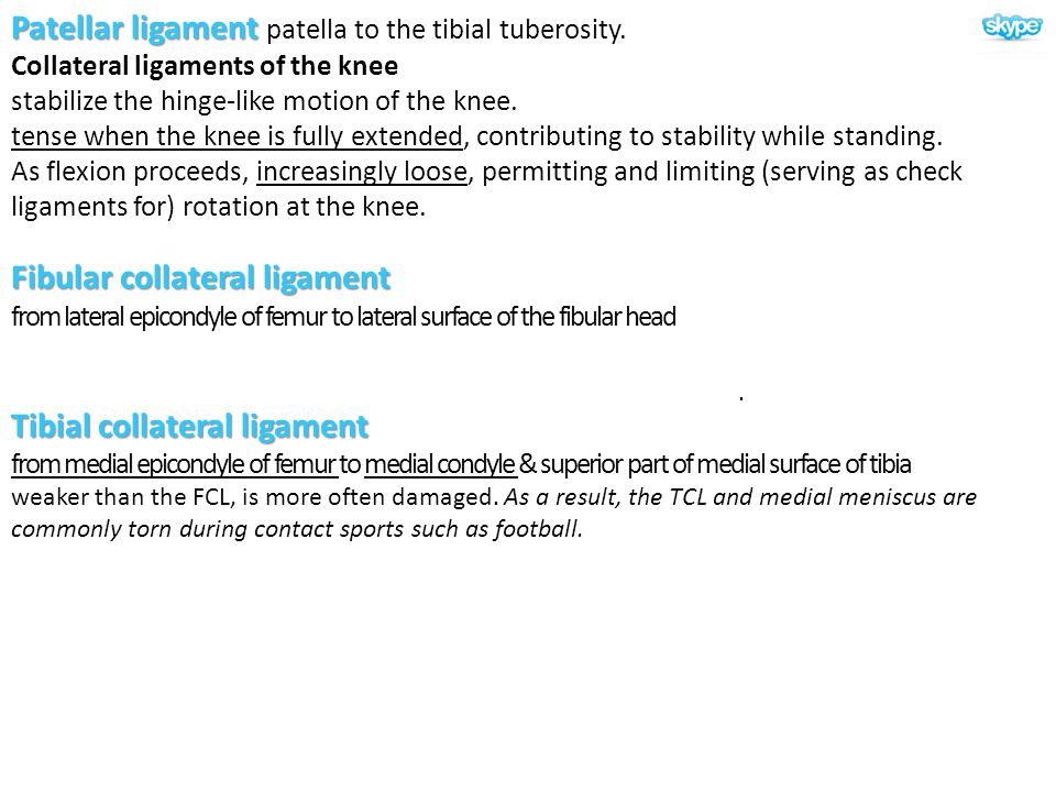 . Patellar ligament Patellar ligament patella to the tibial tuberosity. Collateral ligaments of the knee stabilize the hinge-like motion of the knee.