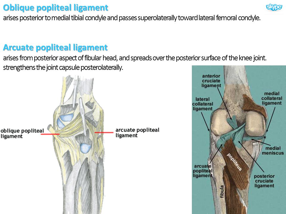 Oblique popliteal ligament arises posterior to medial tibial condyle and passes superolaterally toward lateral femoral condyle.