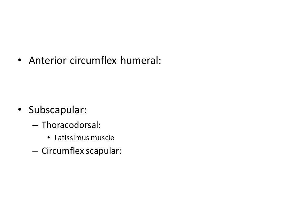 Anterior circumflex humeral: Subscapular: – Thoracodorsal: Latissimus muscle – Circumflex scapular: