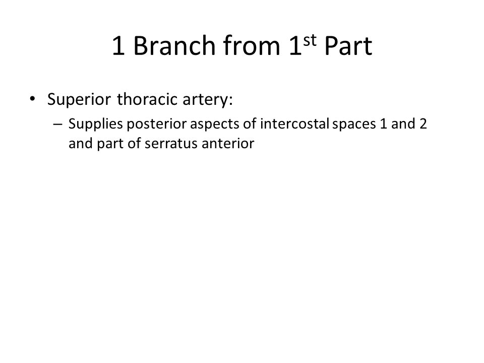1 Branch from 1 st Part Superior thoracic artery: – Supplies posterior aspects of intercostal spaces 1 and 2 and part of serratus anterior