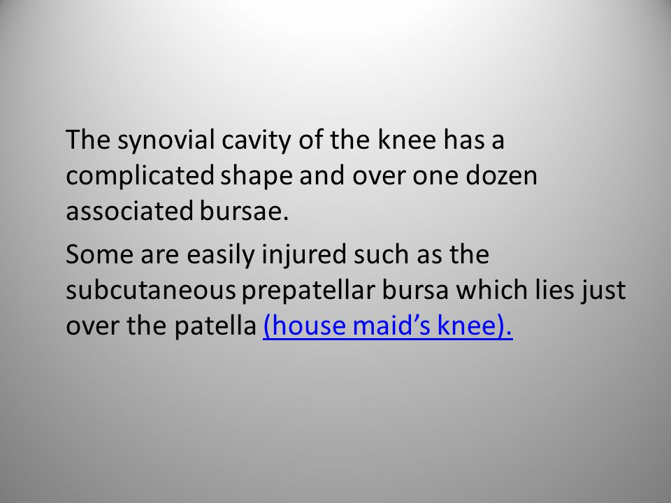 The synovial cavity of the knee has a complicated shape and over one dozen associated bursae.