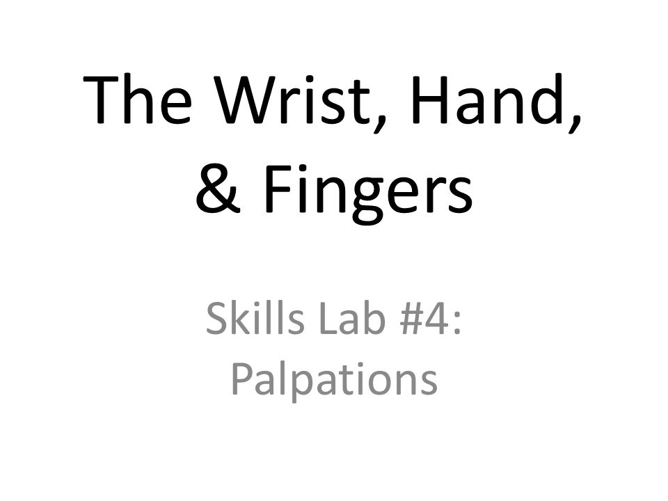 The Wrist, Hand, & Fingers Skills Lab #4: Palpations
