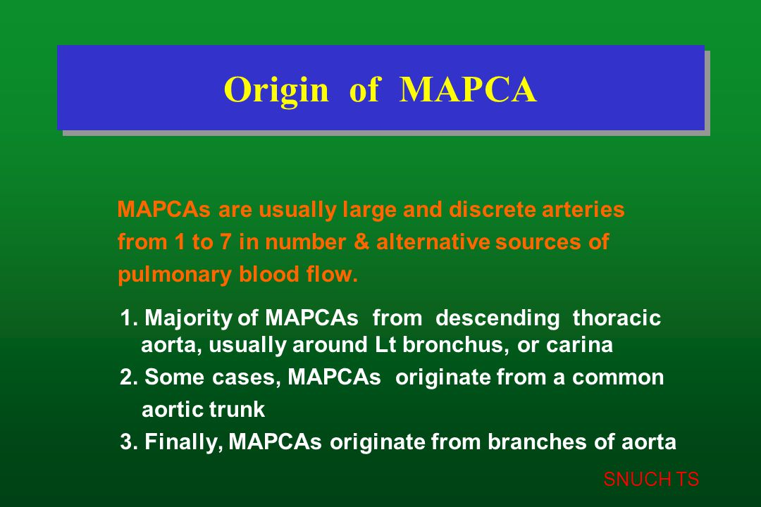 SNUCH TS Origin of MAPCA MAPCAs are usually large and discrete arteries from 1 to 7 in number & alternative sources of pulmonary blood flow. 1. Majori