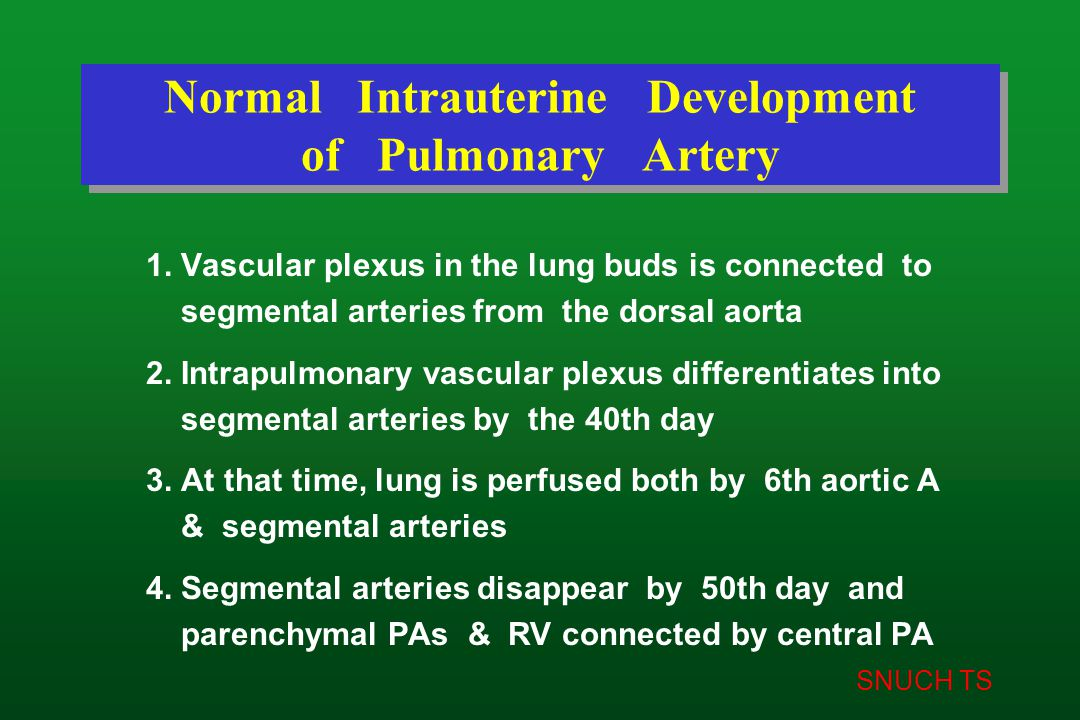 SNUCH TS Normal Intrauterine Development of Pulmonary Artery 1. Vascular plexus in the lung buds is connected to segmental arteries from the dorsal ao