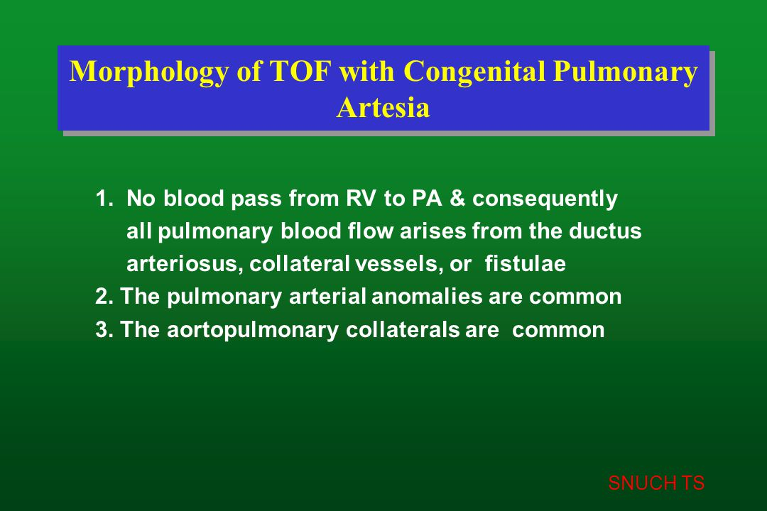 SNUCH TS Morphology of TOF with Congenital Pulmonary Artesia 1. No blood pass from RV to PA & consequently all pulmonary blood flow arises from the du