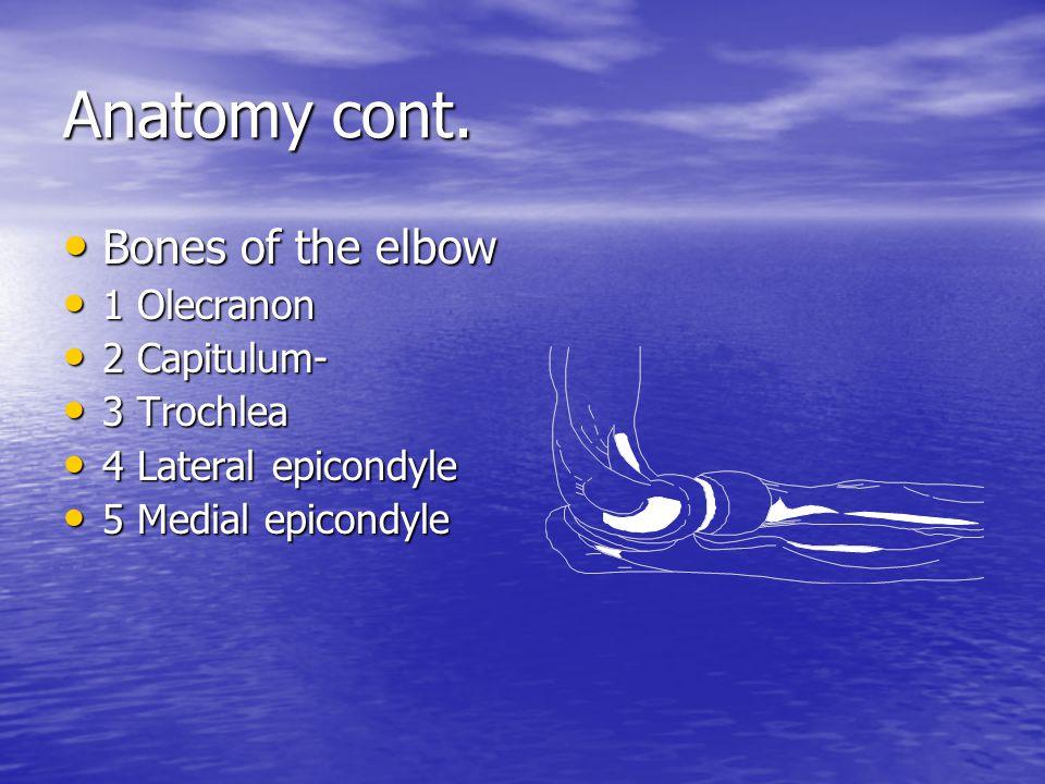 Anatomy cont.