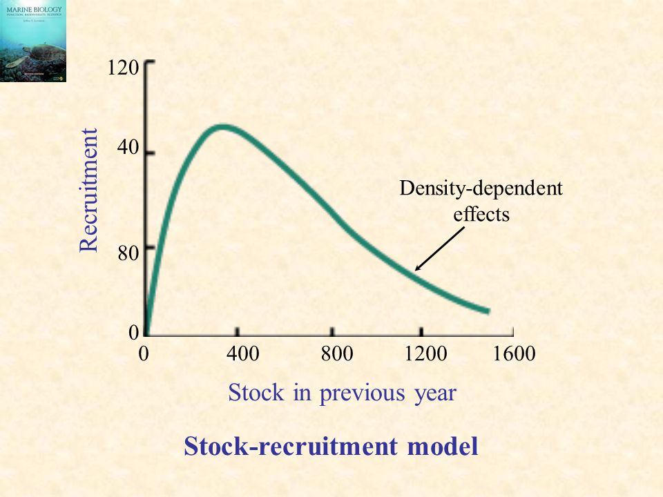 0 400 800 1200 1600 120 40 80 0 Stock in previous year Recruitment Stock-recruitment model Density-dependent effects