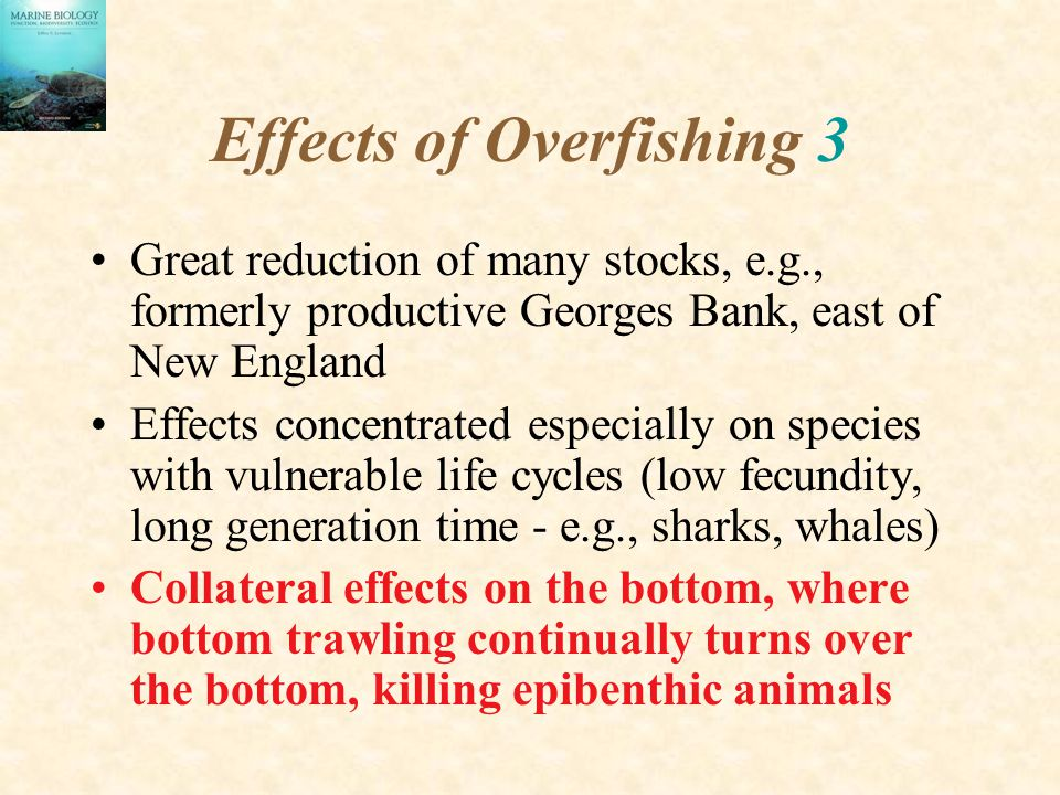 Effects of Overfishing 3 Great reduction of many stocks, e.g., formerly productive Georges Bank, east of New England Effects concentrated especially on species with vulnerable life cycles (low fecundity, long generation time - e.g., sharks, whales) Collateral effects on the bottom, where bottom trawling continually turns over the bottom, killing epibenthic animals