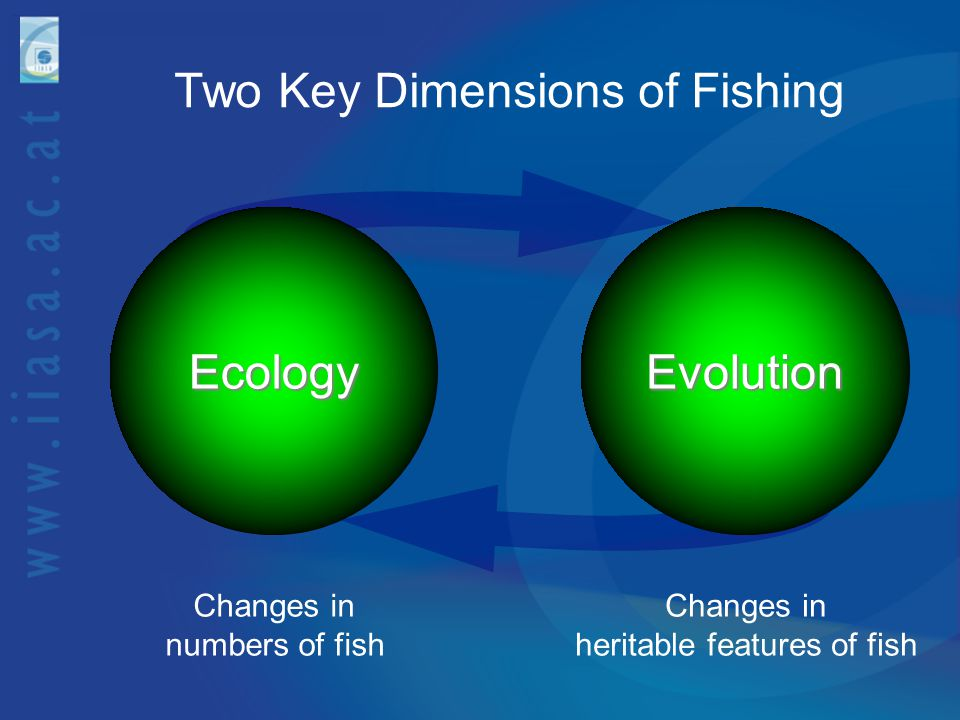 Two Key Dimensions of FishingEcology Changes in numbers of fishEvolution Changes in heritable features of fish