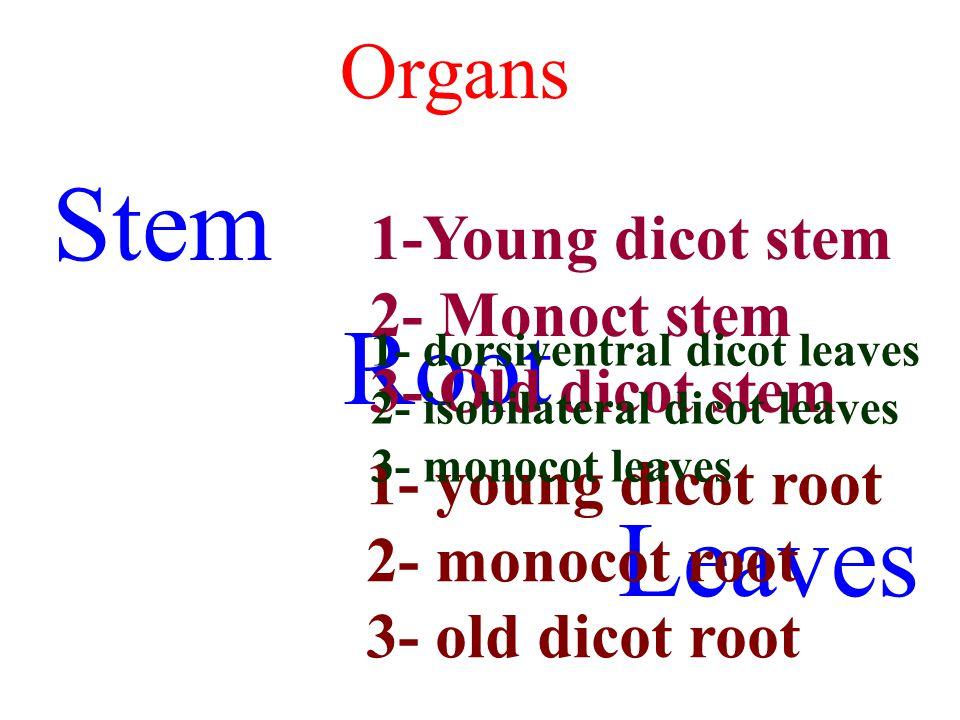 Organs Stem Root Leaves 1-Young dicot stem 2- Monoct stem 3- Old dicot stem 1- young dicot root 2- monocot root 3- old dicot root 1- dorsiventral dico
