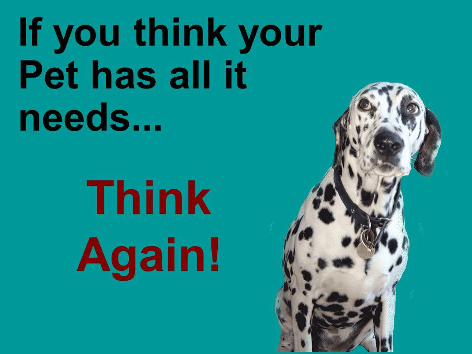 Think Again! If you think your Pet has all it needs...