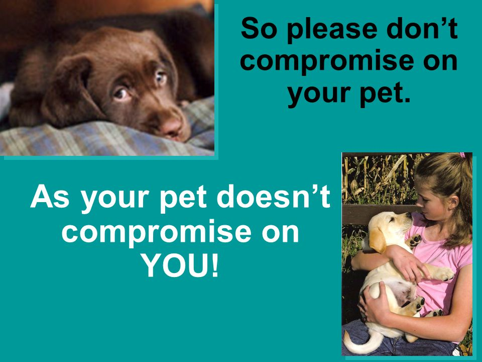 As your pet doesn't compromise on YOU! So please don't compromise on your pet.