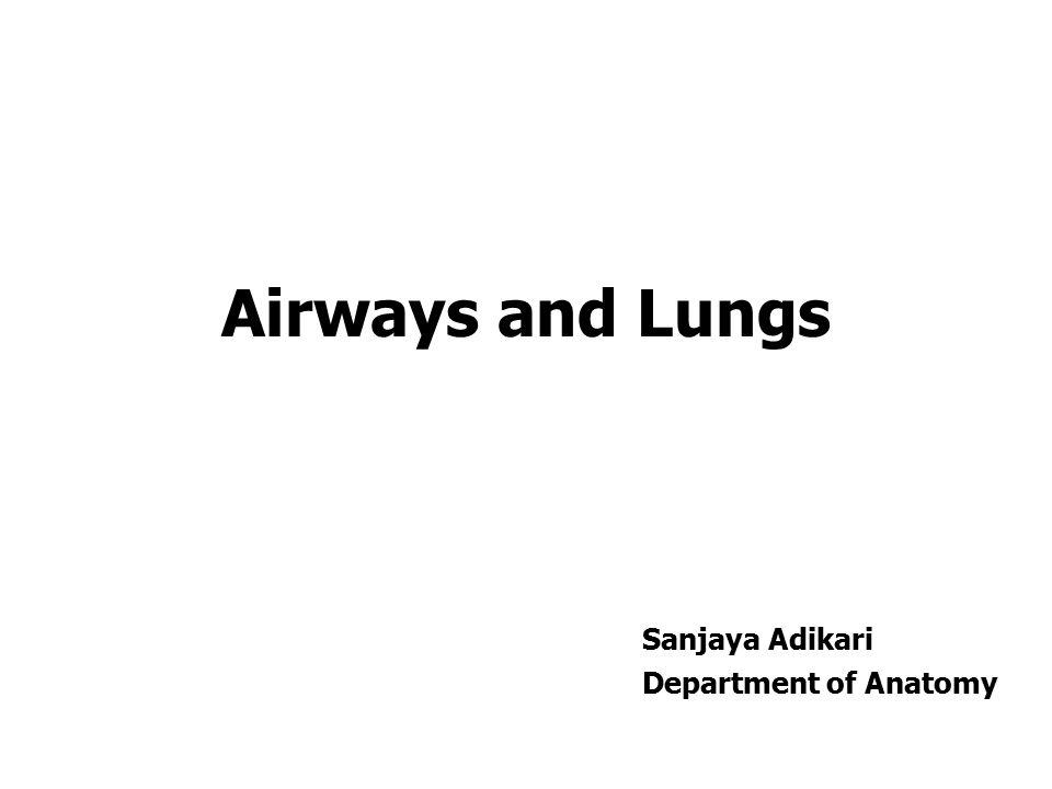 Airways and Lungs Sanjaya Adikari Department of Anatomy
