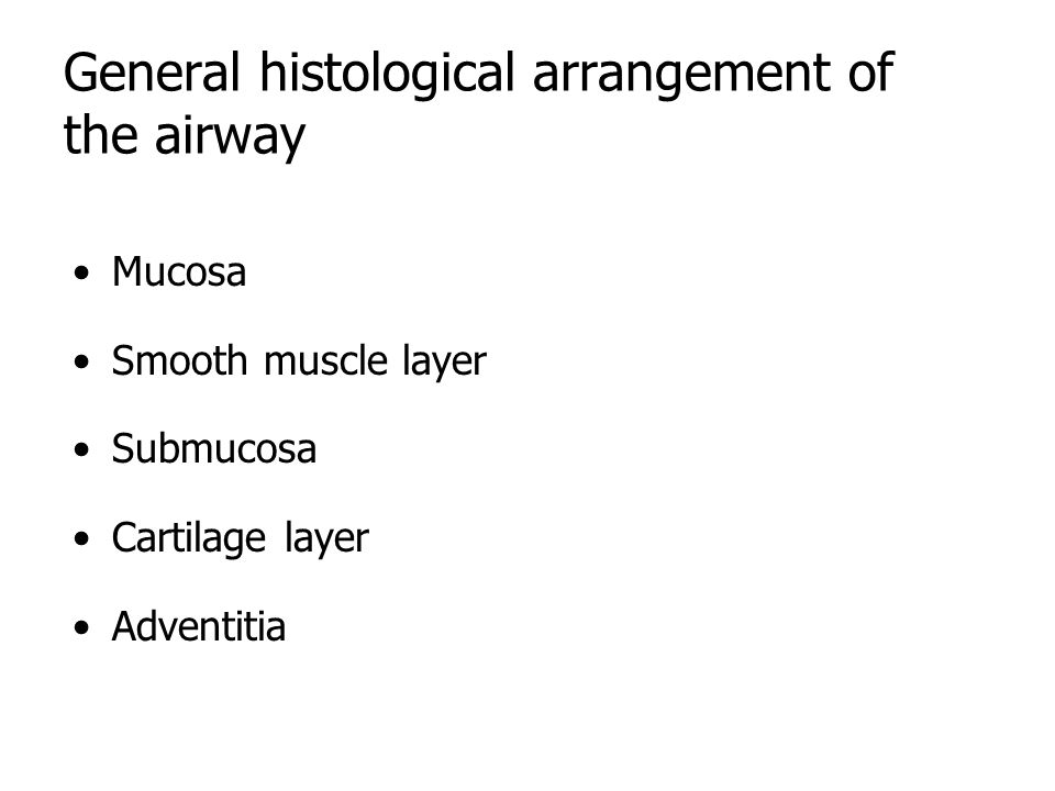 General histological arrangement of the airway Mucosa Smooth muscle layer Submucosa Cartilage layer Adventitia