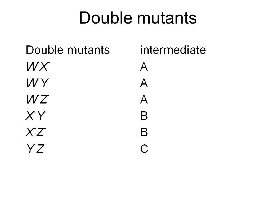 Double mutants