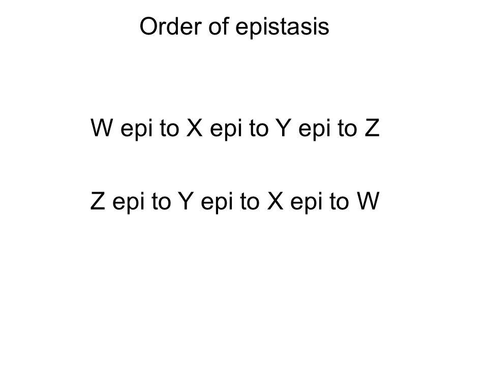Order of epistasis W epi to X epi to Y epi to Z Z epi to Y epi to X epi to W
