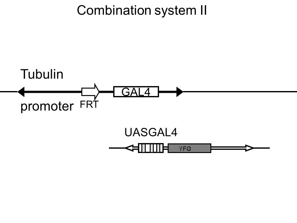 Combination system II GAL4 FRT Tubulin promoter YFG UASGAL4