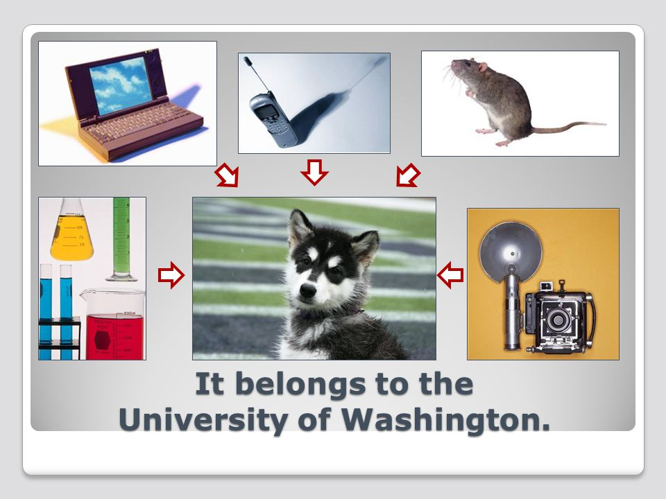 It belongs to the University of Washington.