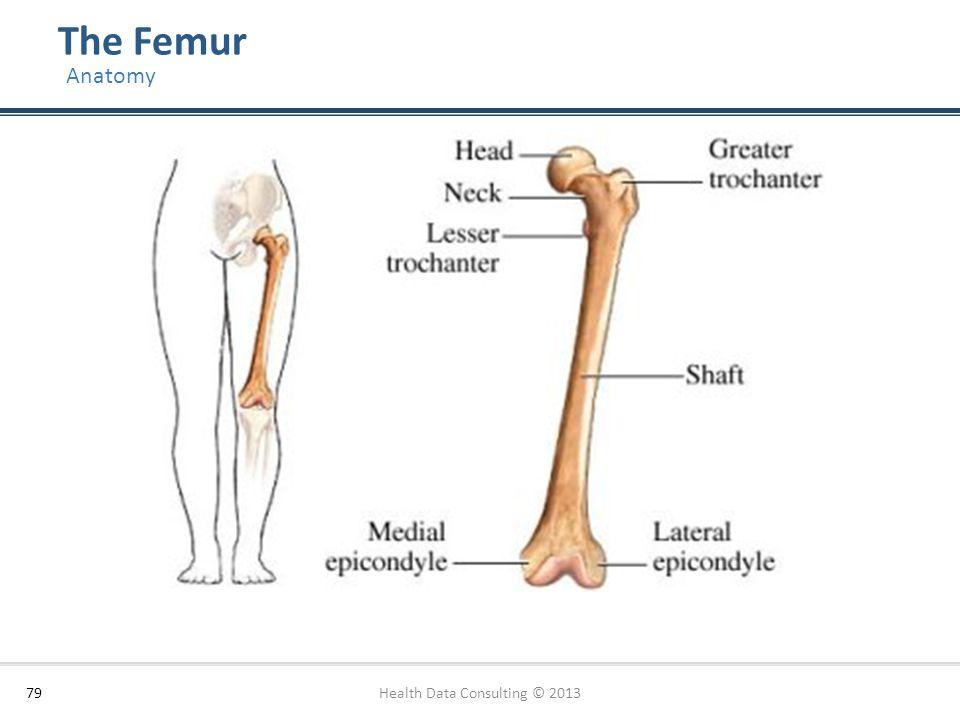 The Femur 79 Anatomy Health Data Consulting © 2013