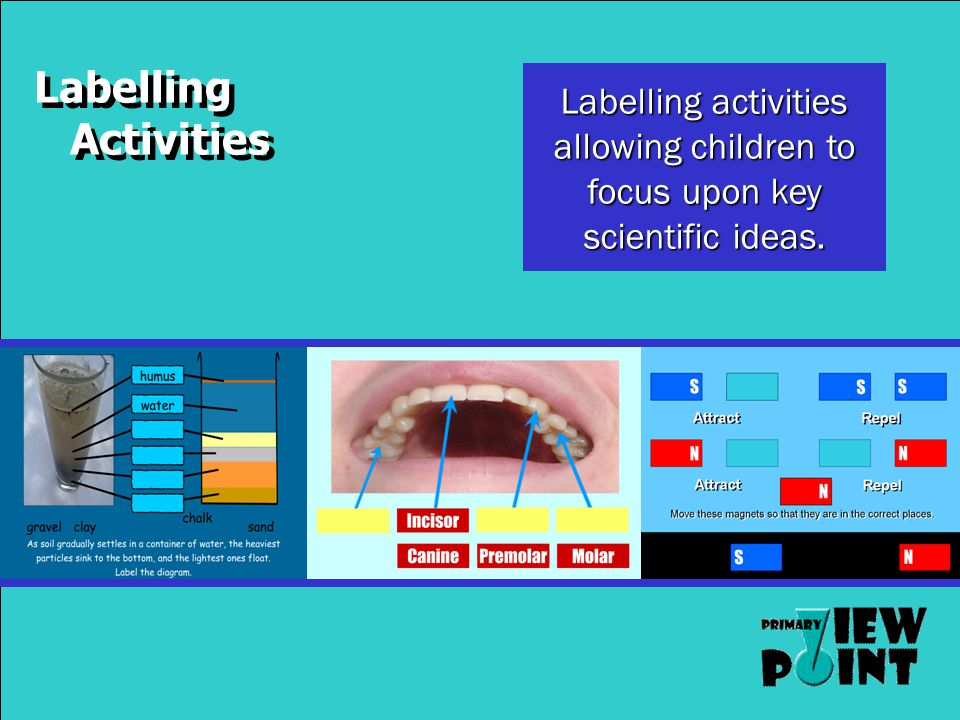 Labelling Activities Labelling activities allowing children to focus upon key scientific ideas.