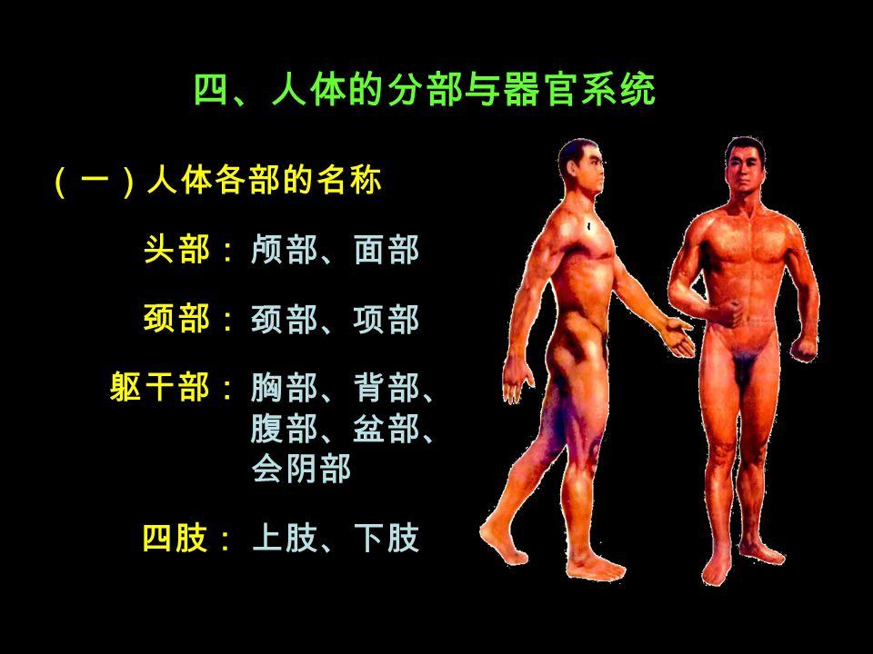 四、人体的分部与器官系统 (一)人体各部的名称 头部: 颈部:颈部: 胸部、背部、 腹部、盆部、 会阴部 四肢: 躯干部: 上肢、下肢 颅部、面部 颈部、项部