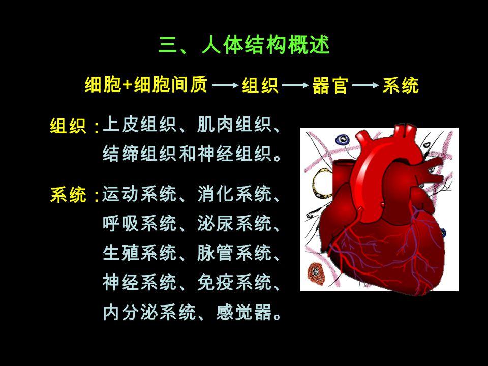 三、人体结构概述 细胞 + 细胞间质 组织: 运动系统、消化系统、 呼吸系统、泌尿系统、 生殖系统、脉管系统、 神经系统、免疫系统、 内分泌系统、感觉器。 系统组织器官 系统: 上皮组织、肌肉组织、 结缔组织和神经组织。