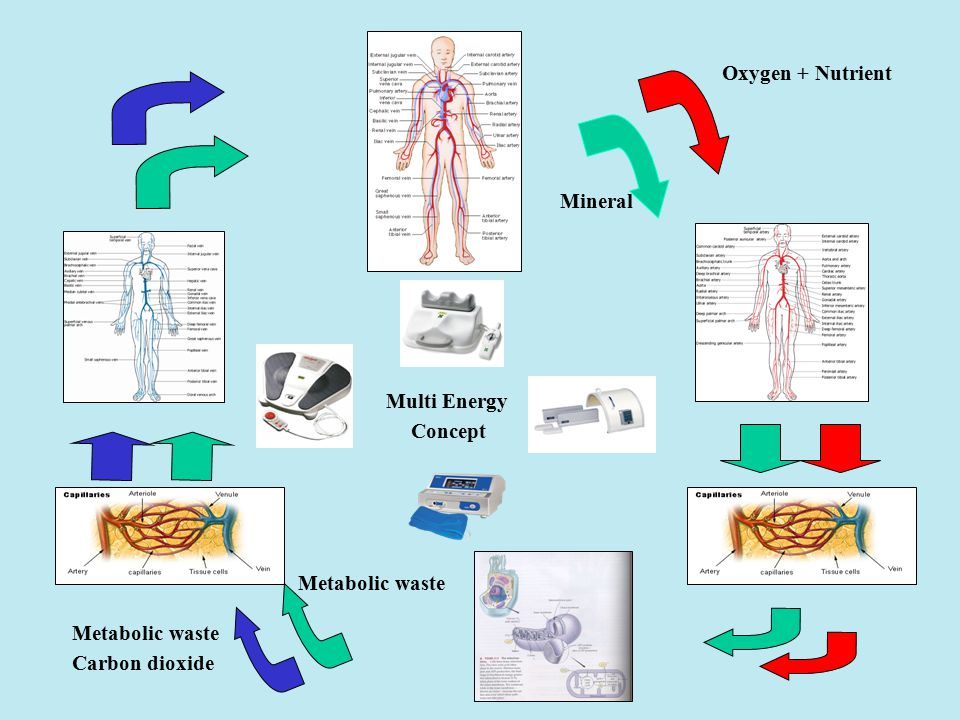 Oxygen + Nutrient Mineral Metabolic waste Carbon dioxide Metabolic waste Multi Energy Concept