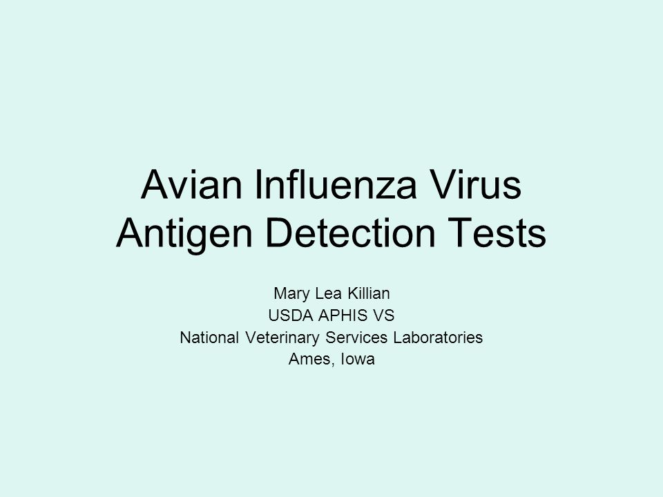 Avian Influenza Virus Antigen Detection Tests Mary Lea Killian USDA APHIS VS National Veterinary Services Laboratories Ames, Iowa