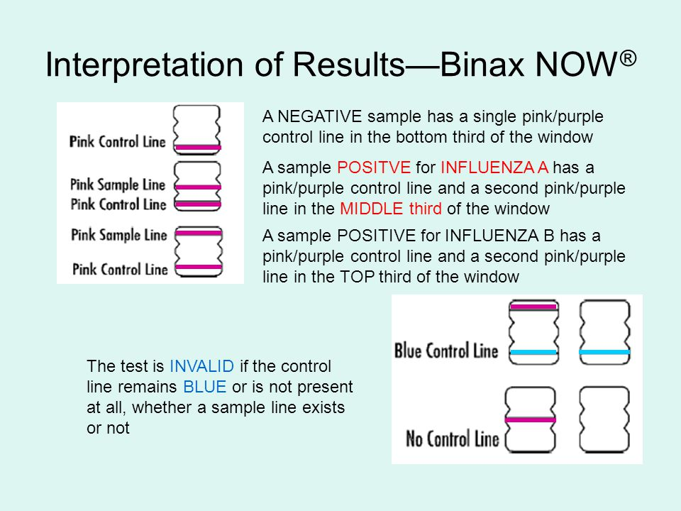 Interpretation of Results—Binax NOW ® A NEGATIVE sample has a single pink/purple control line in the bottom third of the window A sample POSITVE for I