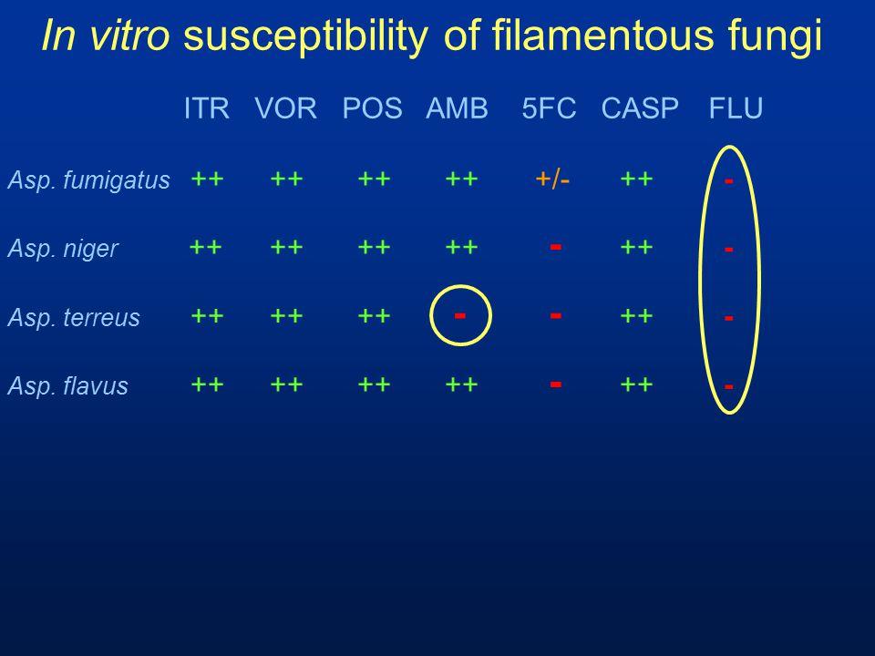 In vitro susceptibility of filamentous fungi Asp. flavus ++++++++ - ++ - Asp. fumigatus ++++++++ +/-++ - ITR VOR POS AMB 5FC CASPFLU Asp. niger ++++++