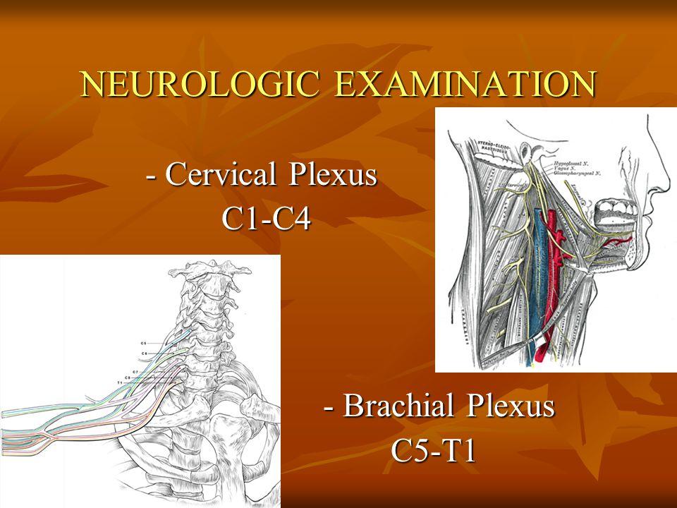 NEUROLOGIC EXAMINATION - Cervical Plexus - Cervical Plexus C1-C4 C1-C4 - Brachial Plexus - Brachial Plexus C5-T1 C5-T1