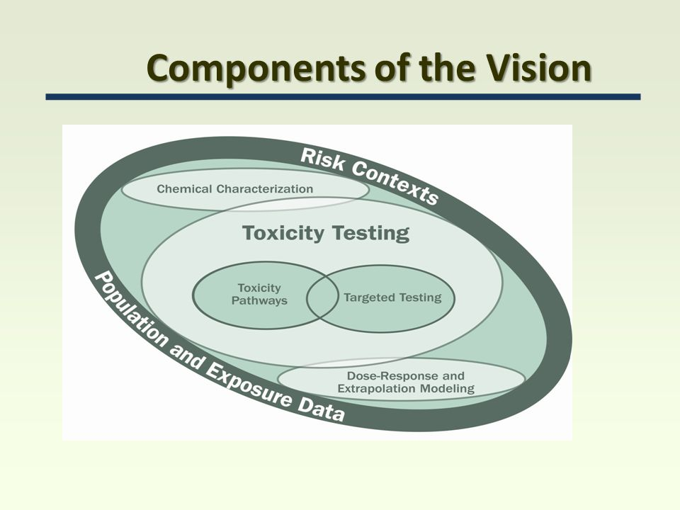 Components of the Vision