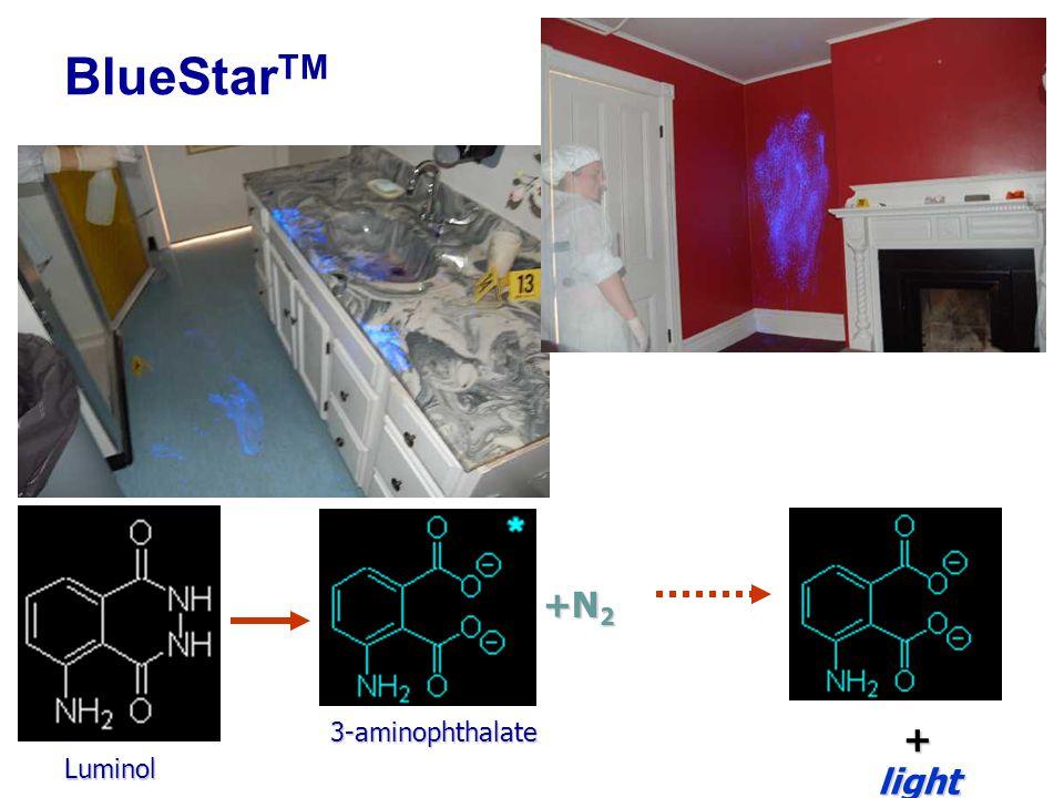 BlueStar TM Luminol 3-aminophthalate +N 2 +light