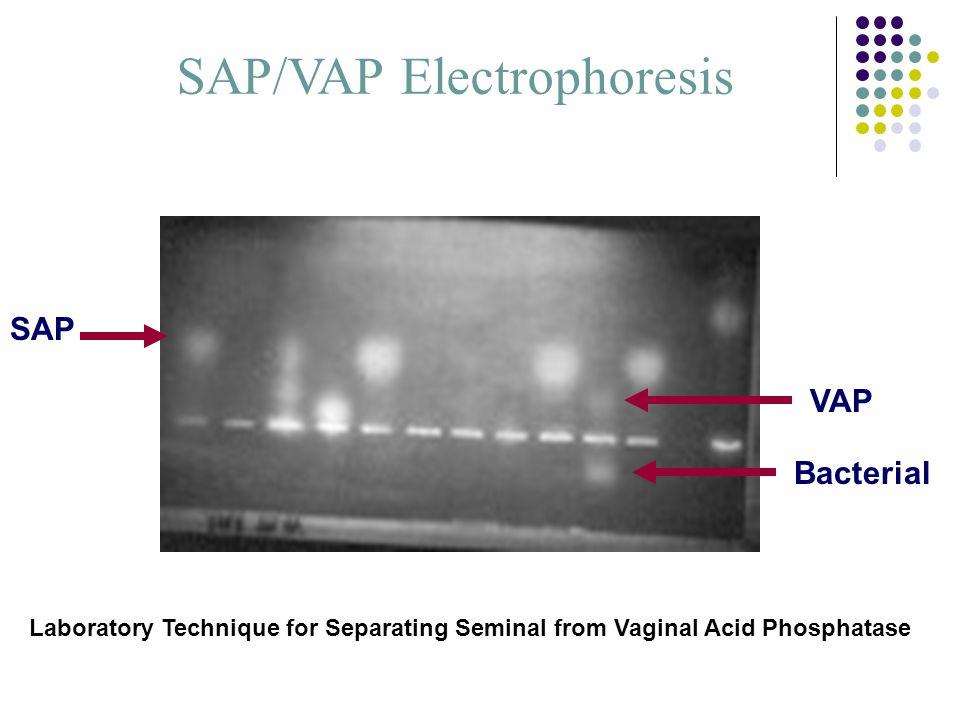 SAP/VAP Electrophoresis SAP VAP Bacterial Laboratory Technique for Separating Seminal from Vaginal Acid Phosphatase