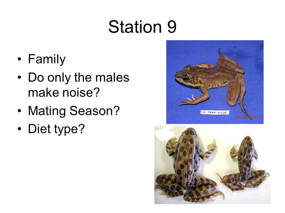 Station 9 Family Do only the males make noise Mating Season Diet type