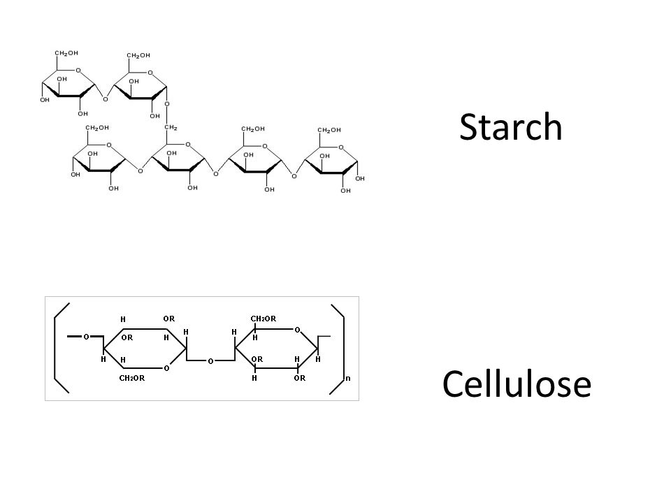 Starch Cellulose
