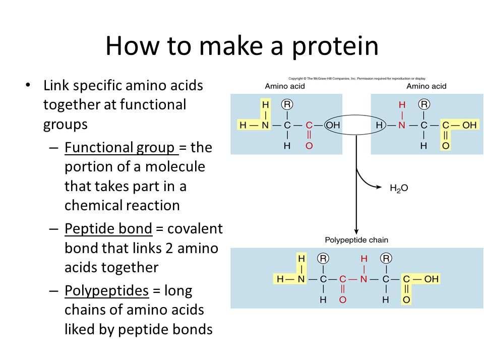 How to make a protein Link specific amino acids together at functional groups – Functional group = the portion of a molecule that takes part in a chemical reaction – Peptide bond = covalent bond that links 2 amino acids together – Polypeptides = long chains of amino acids liked by peptide bonds